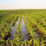 photo of an irrigated corn field