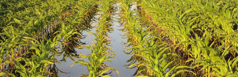 photo of an irrigated corn field